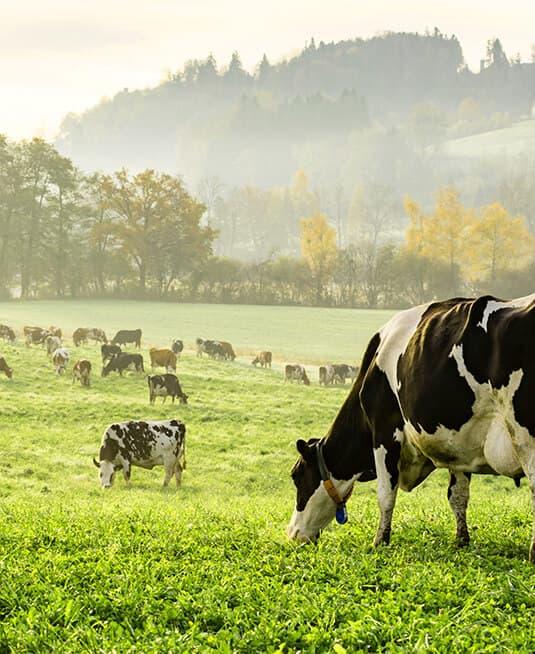 Ковелос для сельского хозяйства